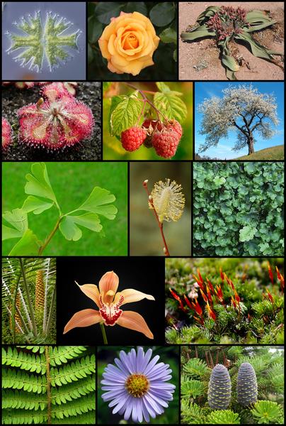 Tipos de reproduccion sexual de las plantas con flores