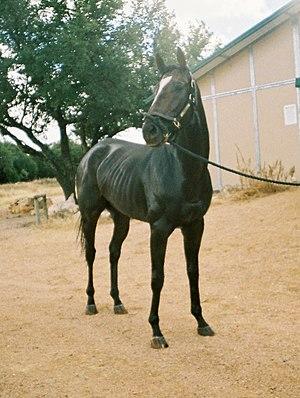 Doctor Decherd - Image: Doctor Decherd race horse