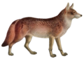 Dogs jackals wolves and foxes Plate V C. l. rufus mod.png