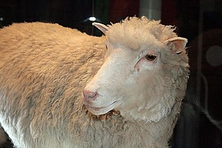 Dolly (sheep) cloned female sheep