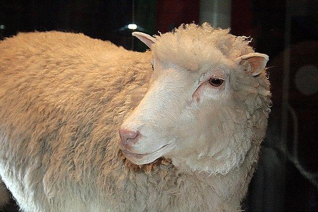 النعجة دولي : هي أول حيوان ثدي يتم استنساخه بنجاح