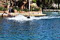 Dolphin Cove 10.jpg
