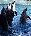 Dolphin Cove 11.jpg