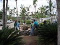 DomRep Palme pflanzen.jpg
