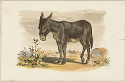 Donkey by Boston Public Library.jpg