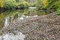 Dourdou River near Nauviale 11.jpg