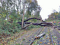 Downed trees and wires on LIRR tracks (8139432670).jpg