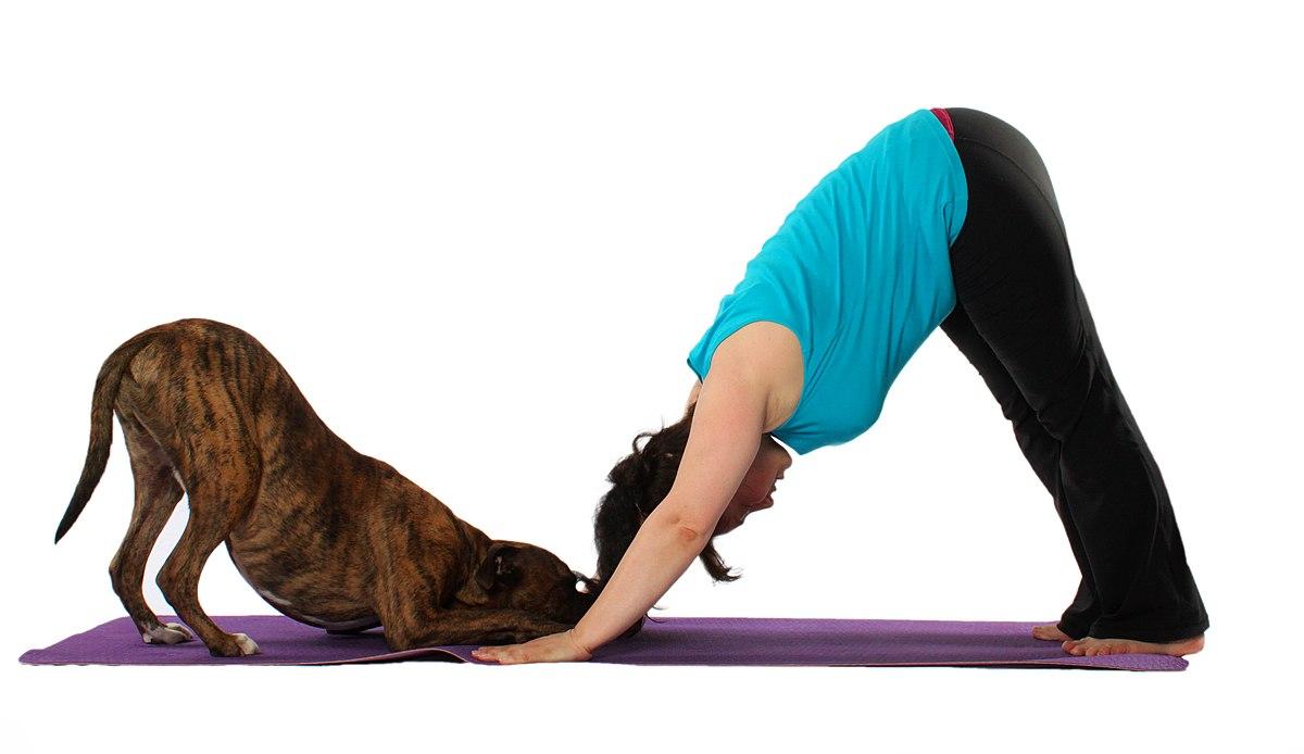 Doga yoga   Wikipedia