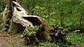 Drahanské údolí - panoramio.jpg