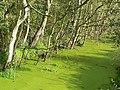 Drain, Loynton Moss - geograph.org.uk - 250782.jpg