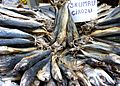 Dried fish at the market in Istanbul.jpg