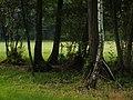 Drzewa - panoramio (1).jpg