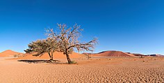 Dune 45 Panorama.jpg