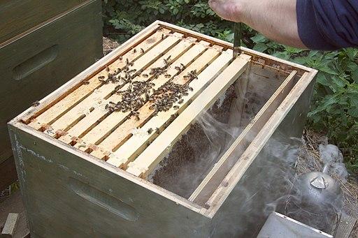 Durchsicht Bienenvolk (4722070084)