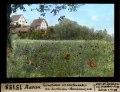 ETH-BIB-Aarau, Feuerblumen vom Gerstenacker am Zurlinden-Aarekanal, von Westen-Dia 247-15158.tif