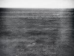 ETH-BIB-Fliehende Zebraherde aus 50 m Höhe-Kilimanjaroflug 1929-30-LBS MH02-07-0062.tif
