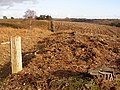 Edge of felled area in Newlands Plantation, Ibsley Common, New Forest - geograph.org.uk - 315773.jpg