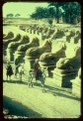 Egypt. Karnak. Row of Sphinxes in front of 1st pylon LOC matpc.23079.tif