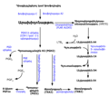 Eicosanoid synthesis arm.png