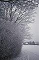 Eifel 2010 - Rinnen (ORC1509).jpg