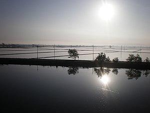 El amanecer sobre los arrozales del Delta del Ebro, Aldea, España.jpg