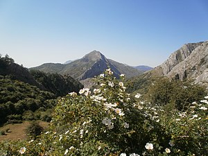 El verano en la montaña.jpg
