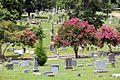 Elmwood cemetery1.jpg