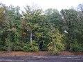 Emmerich Elsepaßweg PM19-07.jpg