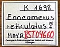 Enneamerus reticulatus GZG-BST04660 specimen tag.jpg