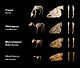 Equine evolution.jpg