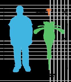 Comparaison entre la taille d'un homme actuelle et d'un eurypterus.