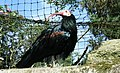 Exotic Bird - Belfast Zoo Aviary.jpg