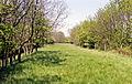 Eydon Road Halt site geograph-3465457-by-Ben-Brooksbank.jpg
