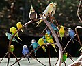 FW Birds in Color (5569040979).jpg