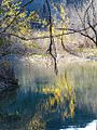 Fall Colors on Barton Creek.jpg