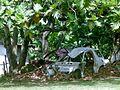 Family Car Wrecks (29725411323).jpg