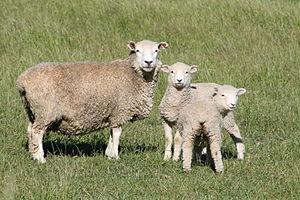 Fauna de Nueva Zelanda07