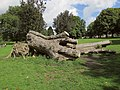 Felled tree. St Andrews Park, Bristol (geograph 5507865).jpg