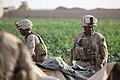 Female Marine brings diversity to the women of Afghanistan DVIDS299423.jpg