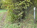 Ferschweiler Plateau Rundweg - geo.hlipp.de - 14748.jpg