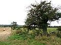 Field boundary, Little London - geograph.org.uk - 576378.jpg