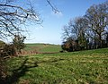 Field near Marldon - geograph.org.uk - 715643.jpg