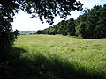 Field on Dog Lane - geograph.org.uk - 511805.jpg
