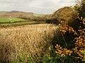 Fields beside Horsham Lane - geograph.org.uk - 1043728.jpg