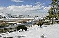 File-Bison grazing near Midway Geyser Basin in winter;-Jim Peaco;-March 2, 2006;-Catalog 18997d;-Original IT8M9177 (03fc2836-9f98-4378-ad71-8b55f6dfc559).jpg