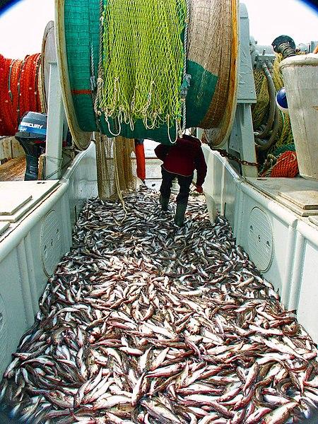 Lov rýb vo veľkom do obrovských sietí v moriach a oceánoch veľmi poškodzuje prírodné ekosystémy