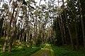 Flechten-Kiefernwälder 5.jpg