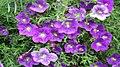 Fleur225.jpg