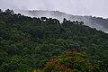 Flora de Ilhabela.jpg
