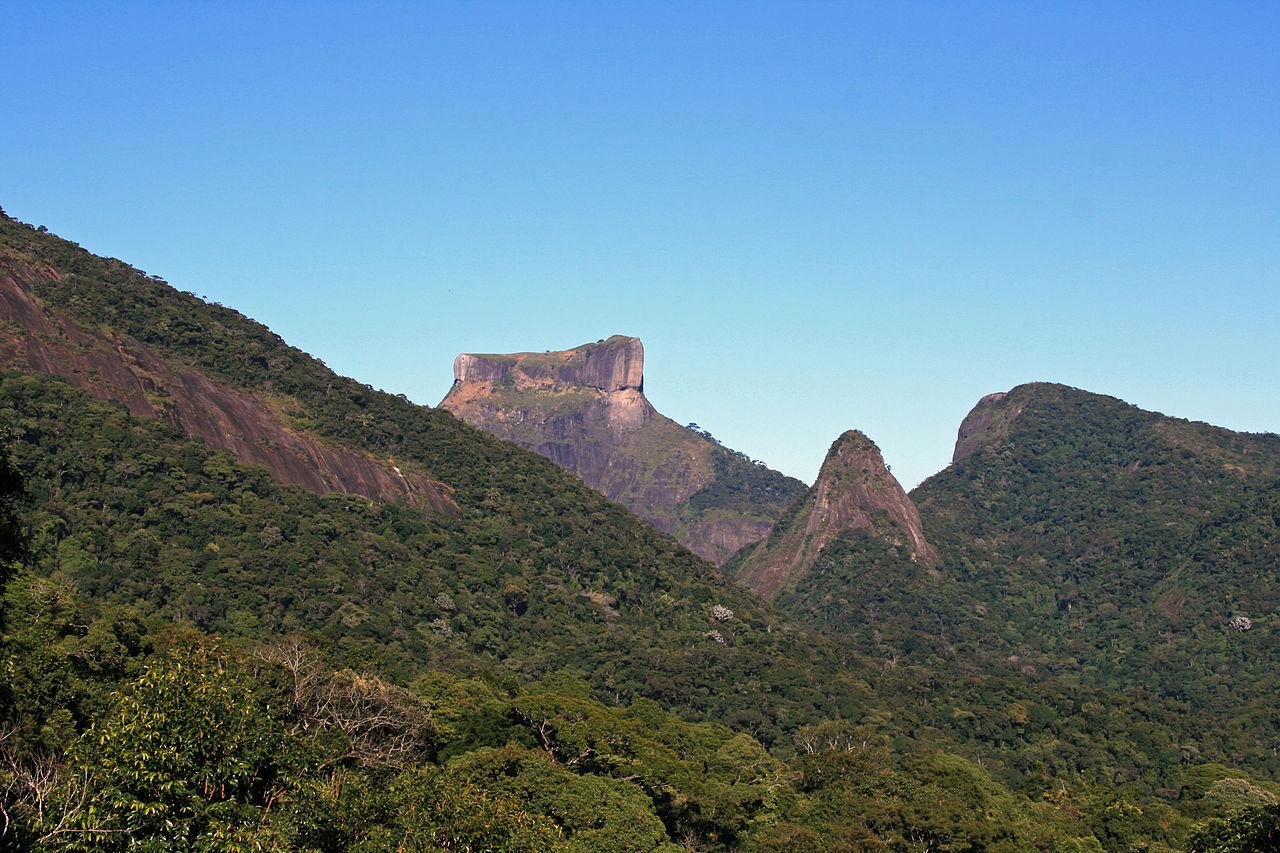 Floresta da Tijuca 60.jpg